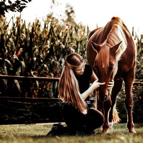 aha fotografie fotograaf nunspeet paardenfotograaf